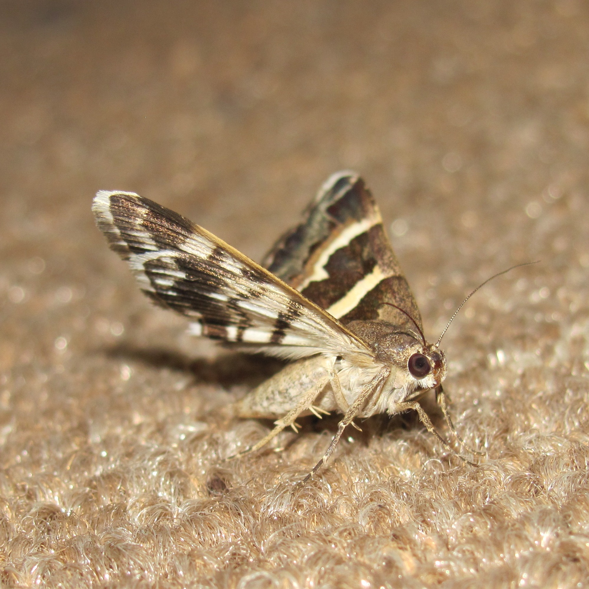 Read more about the article Which insects Eats wool?