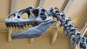 Read more about the article Which Science involves the study of Dinosaurs?